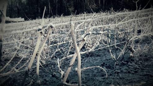 """""""L' hiver, c' est la saison du recueillement de la terre, son temps de méditation, de préparation..."""" Lionel Boisseau"""