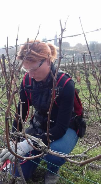 La taille, un moment dur du travail de la vigne mais qui symbolise le renouvellement du cycle de la vie nécessaire à la maîtrise du rendement, gage de qualité pour la future vendange.